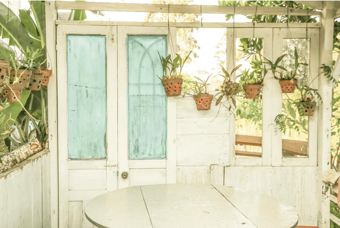 zavěšené rostliny