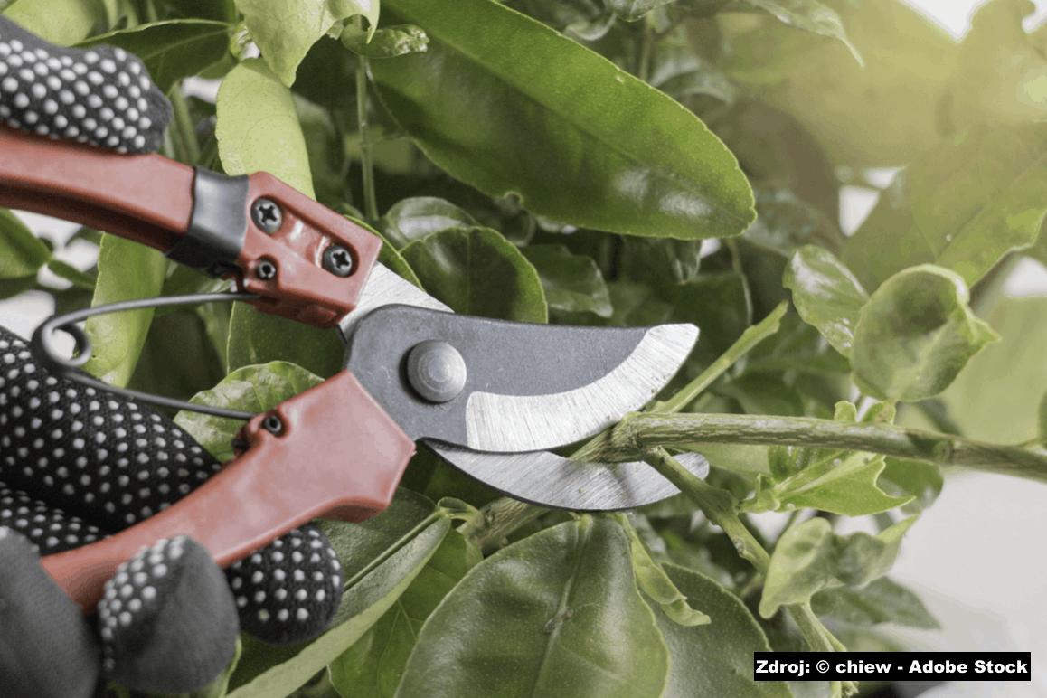 Tipy pro zahradnické nůžky na větve